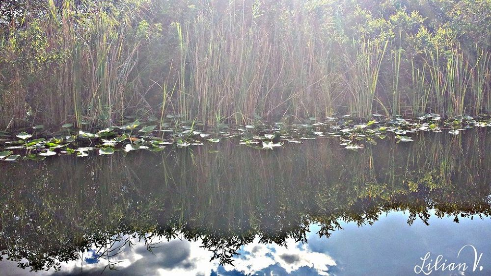 FLORIDA EVERGLADES,,REFLEJOS by lilianvillarreal