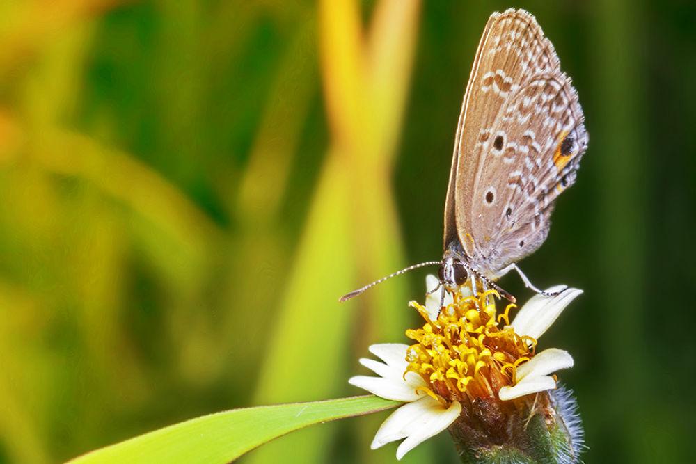 Honey'ing Morning by adityakeisya