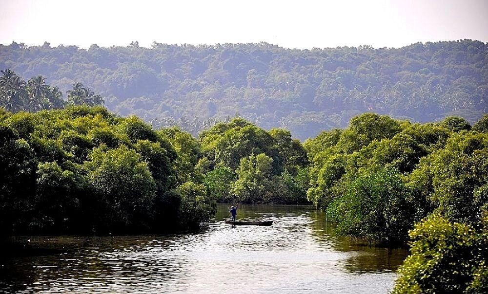 Photo in Nature #india #goa #mangroove #water #lake #boat #trees