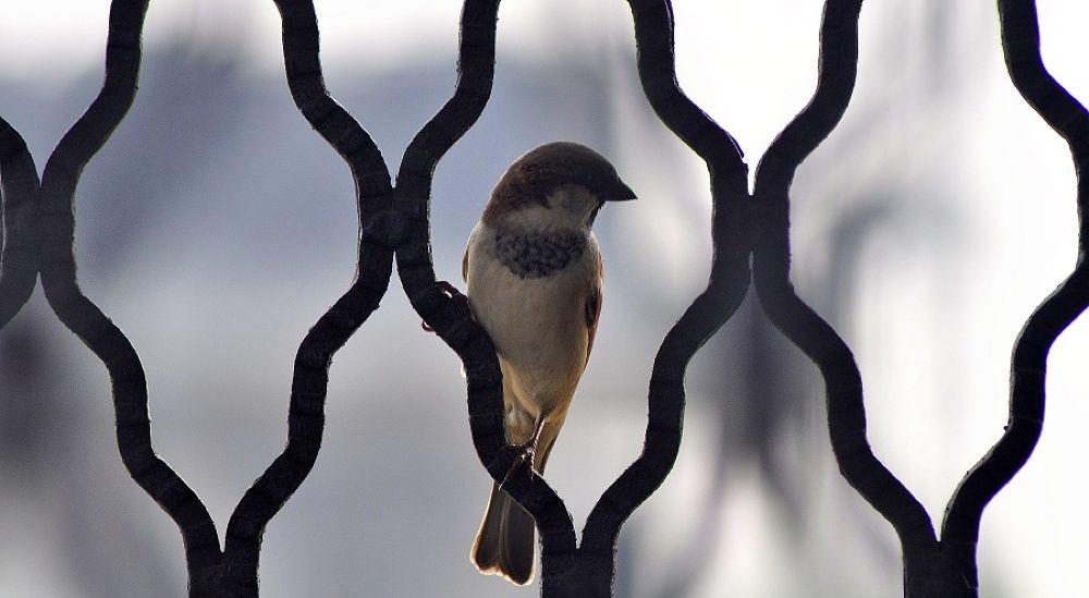 Photo in Random #bird #sparrow #patterns