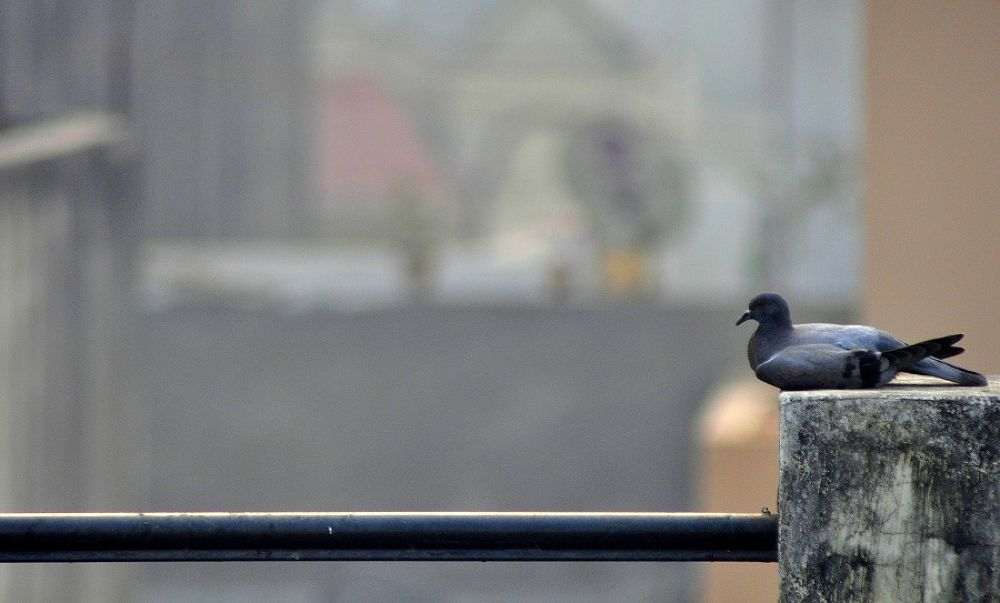 Photo in Random #bird #pigeon