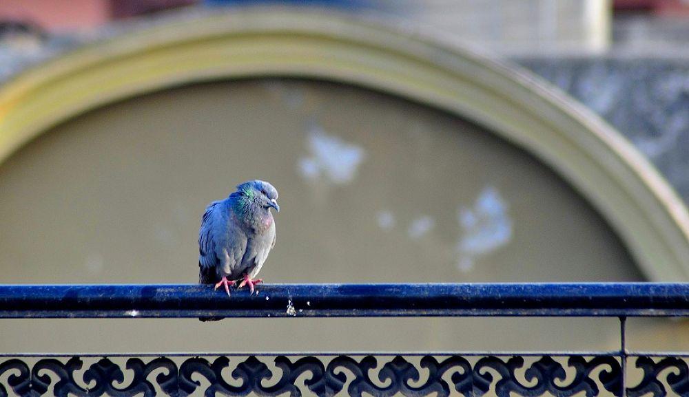 Photo in Random #bird #pigeon #pattern