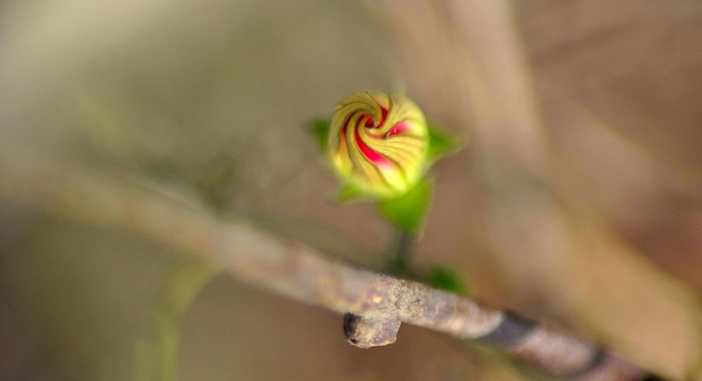 Photo in Nature #flower #bud #red