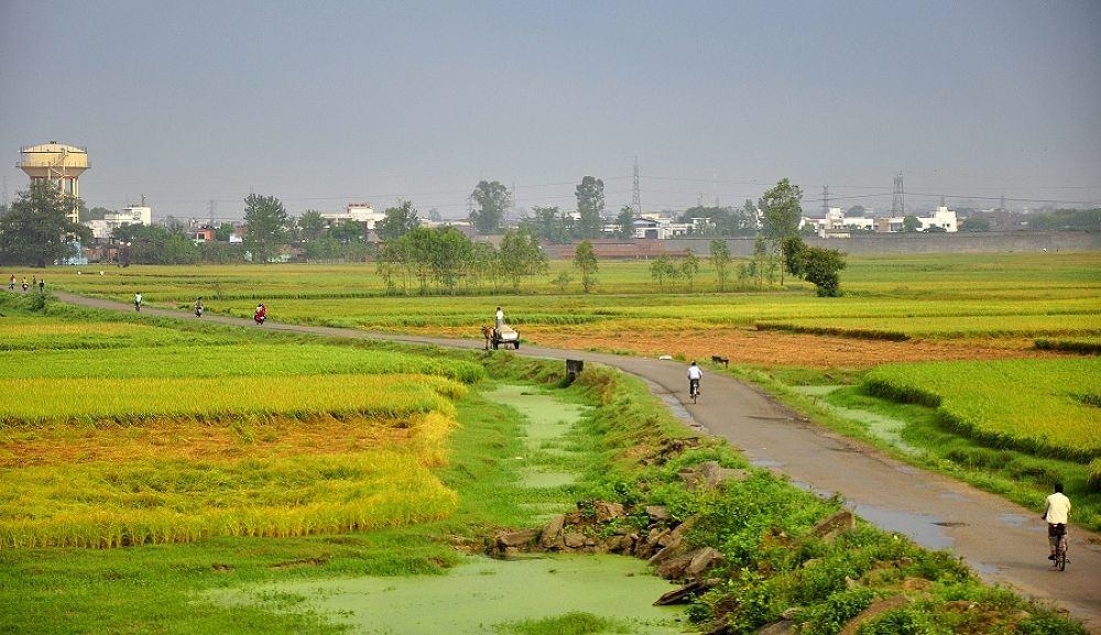 Photo in Random #india #landscape #road #green #fields #bicycle