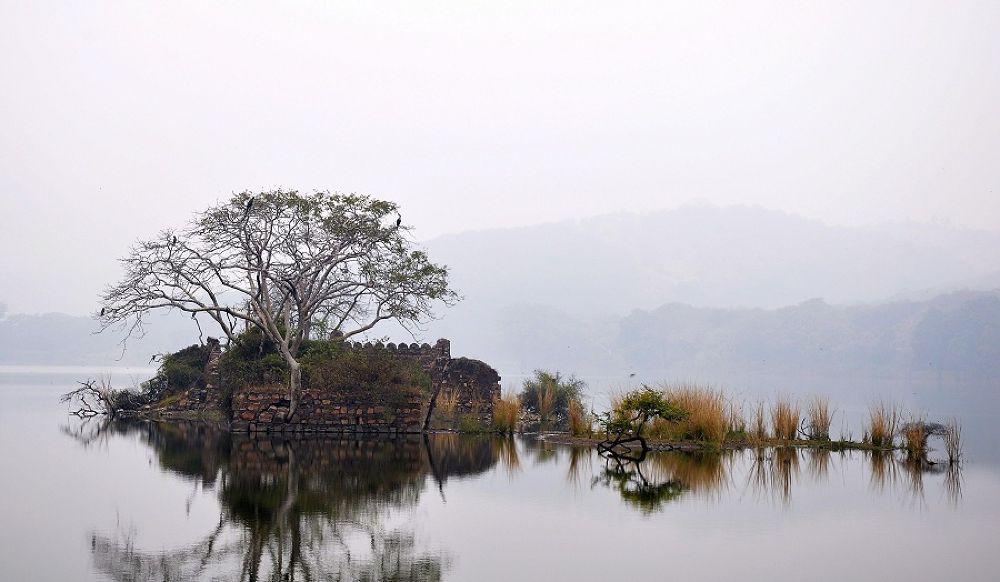 Photo in Landscape #water #lake #tree #scene #scenic #grass