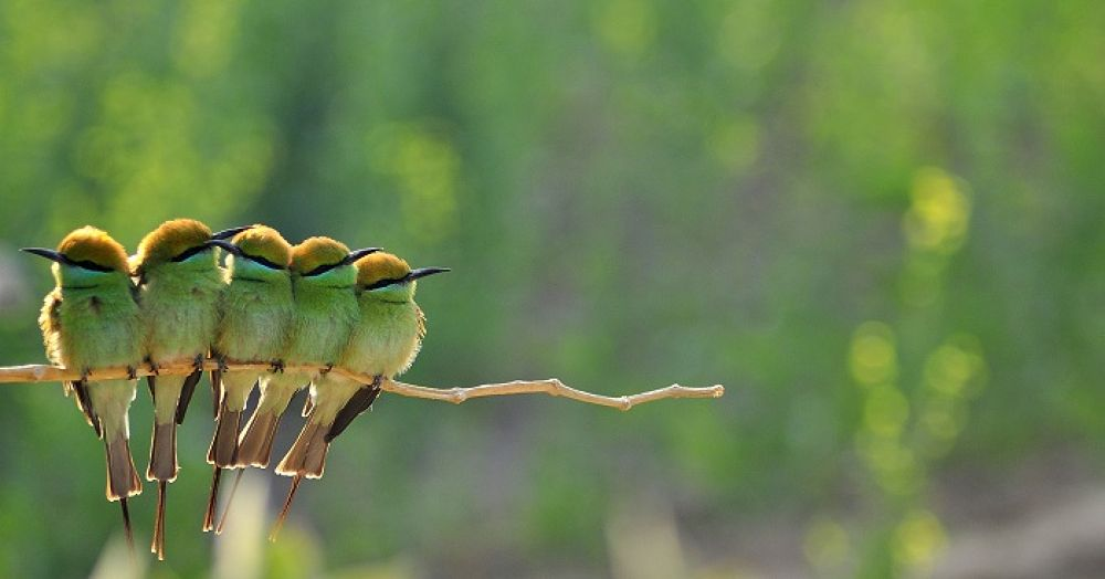 Photo in Animal #bird #bee eaters #magpie #robin #green
