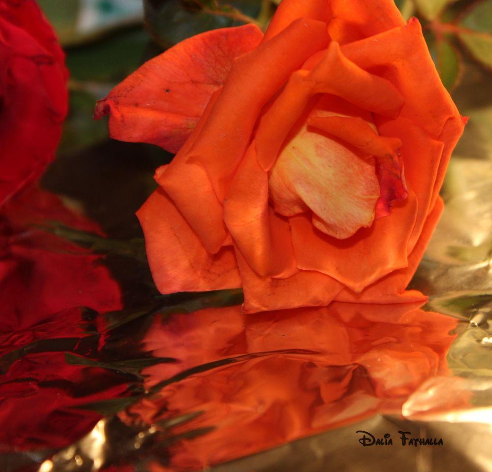 Orange Flower by dalia