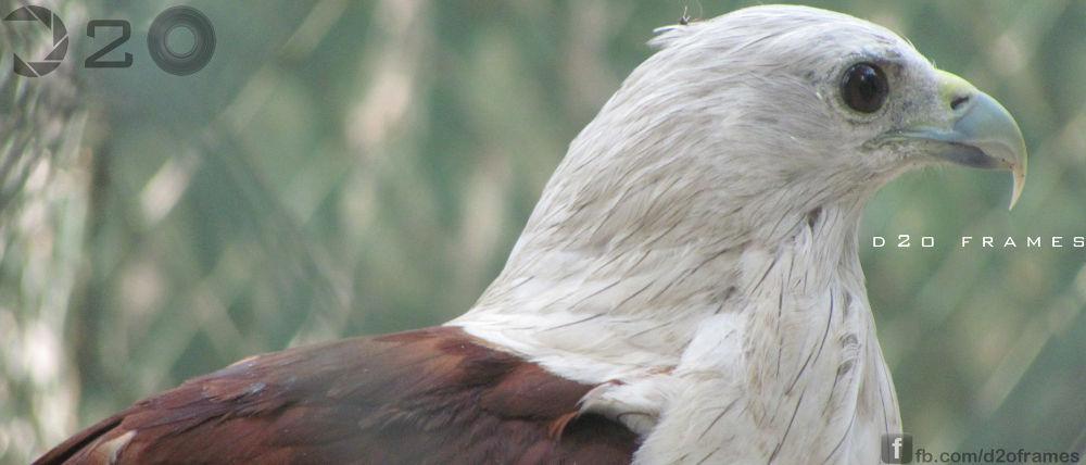 eagle.jpg by d2oframes