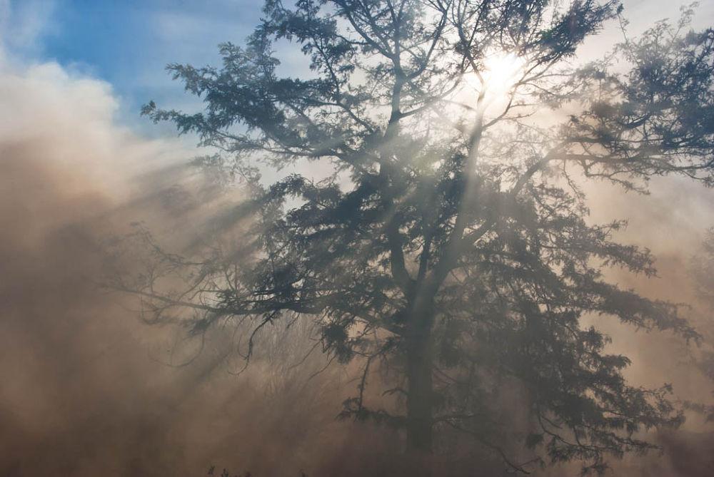 Fire-0791-0075-PIX.jpg by marcrossmann