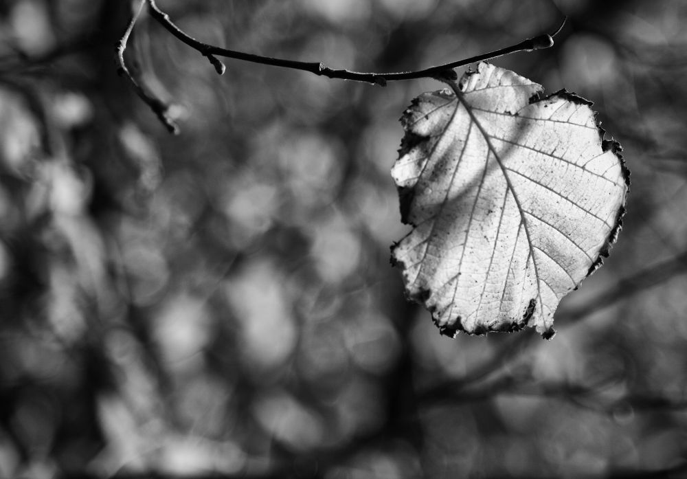 Autumn Leaf  by Mike Howe