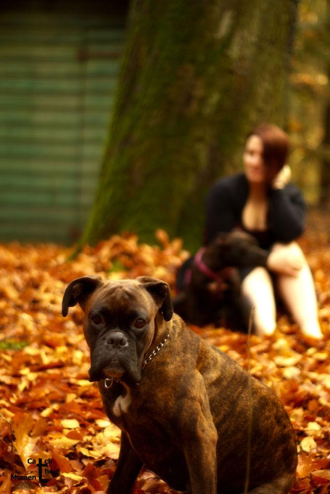 Dogwalk by mylittleactress
