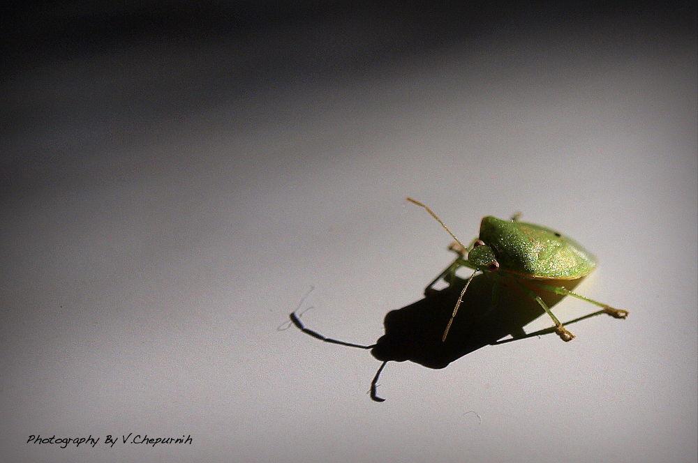 Bug by Art Of V.C.