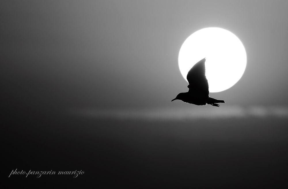 gabbiano al tramonto by mauriziopanzarin