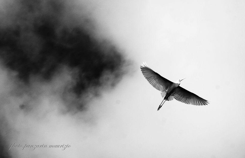 le ali della libertà by mauriziopanzarin