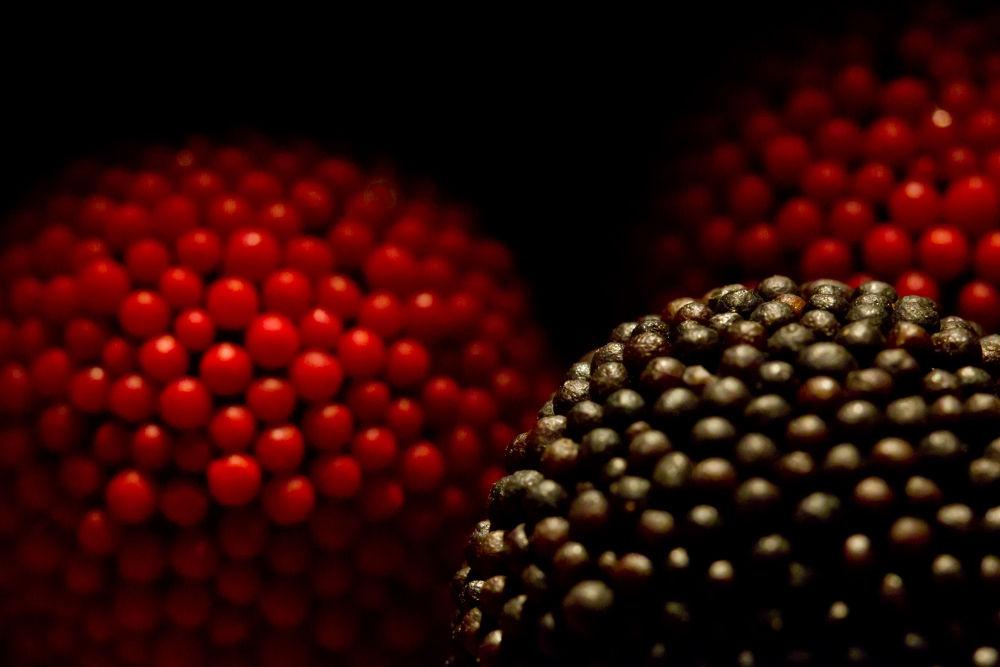 Blackberry jelly by Pablo Passero