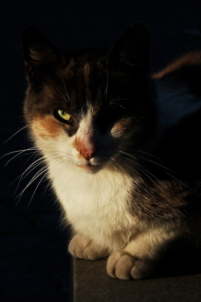 Twilight cat by Pablo Passero