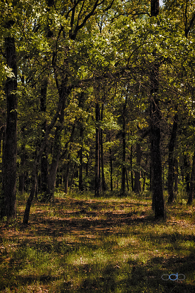 Forest path and sun shadows . . . by OneDigitalPlacePhotography