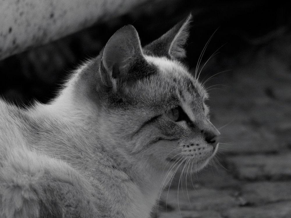 catsofthepier_203214  by Lasorc Carmand