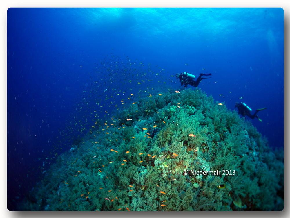 Elphinstone Reef  by alexanderniedermair