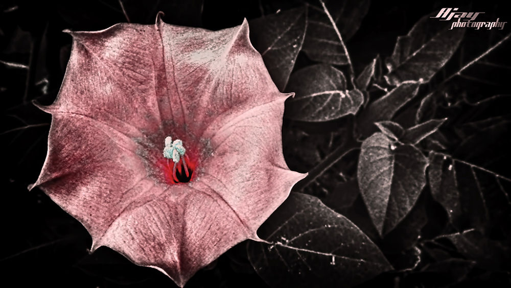 amaze.jpg by Akshahu