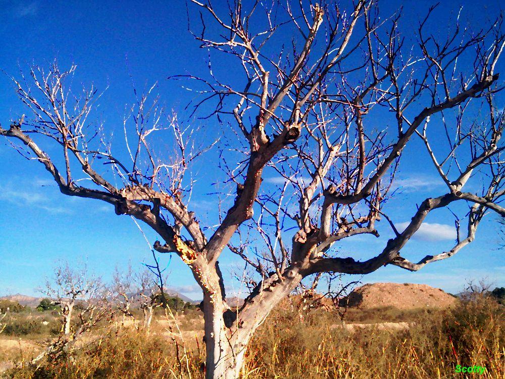 Los árboles mueren de pié by  Scotty