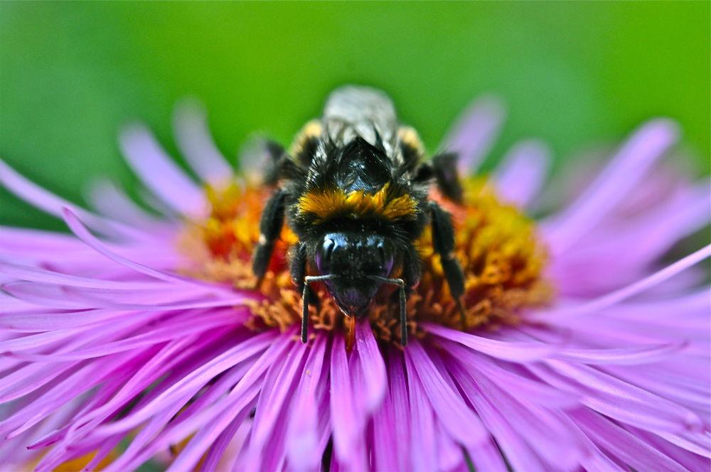 Bee  by moeng