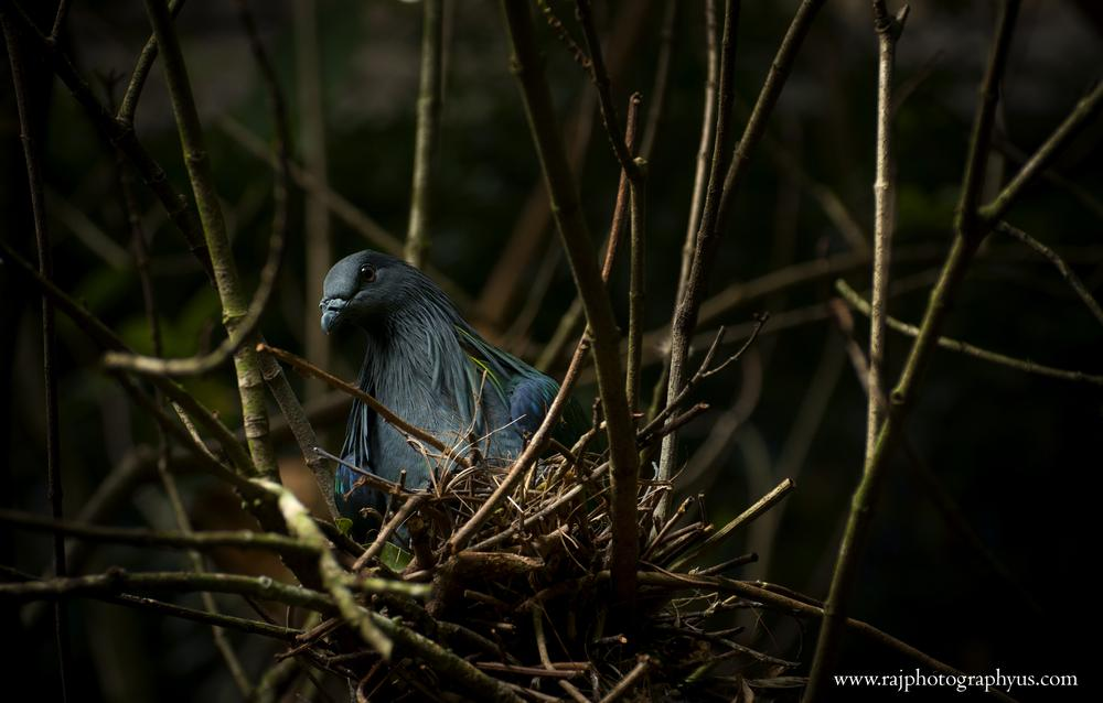 bird by rajphotography