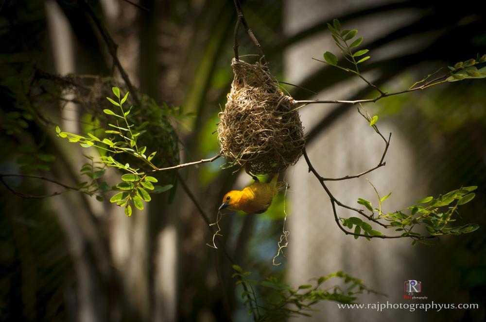 bird by rajphotography