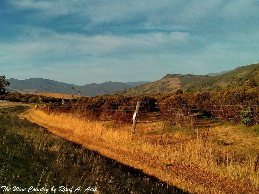 Wine Country of San Luis Obispo, California by raufadil