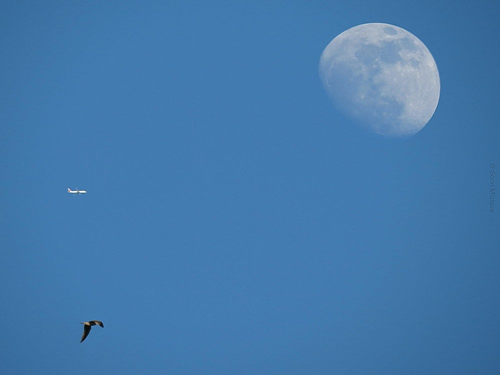 Flight to the Moon by smiclaus