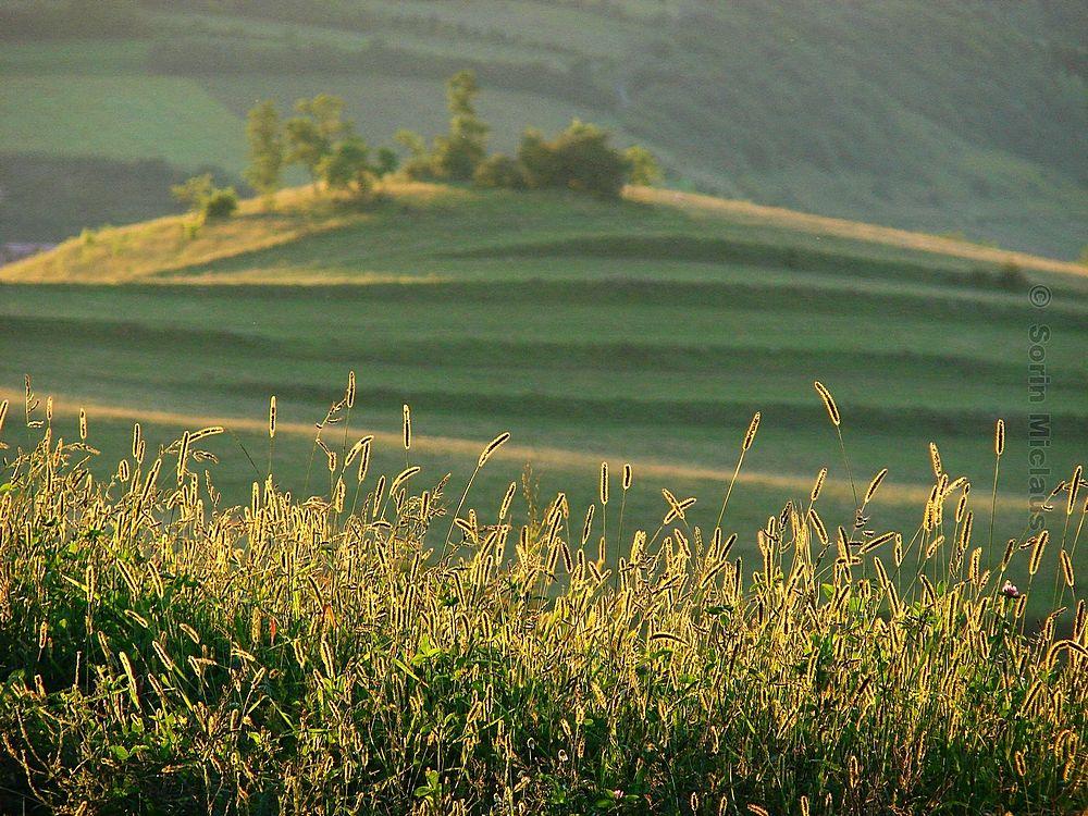 Photo in Nature #green #grass #field #summer #sunlight #evening #hill #nature