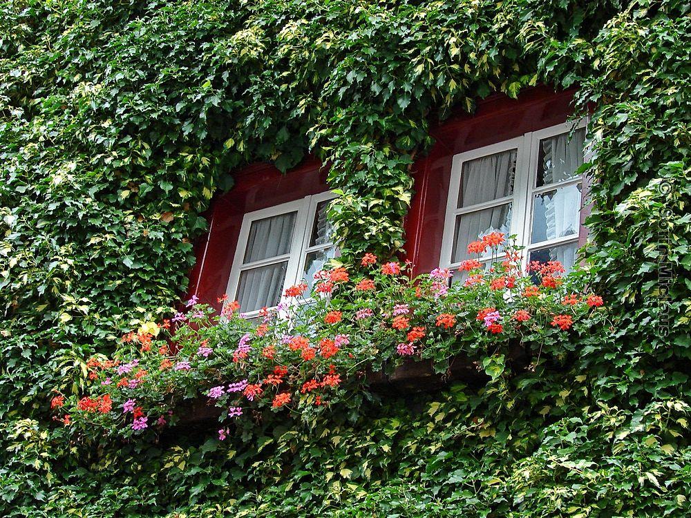 Photo in Random #window #two #twin #green #vegetation #flowers #wood #house #full