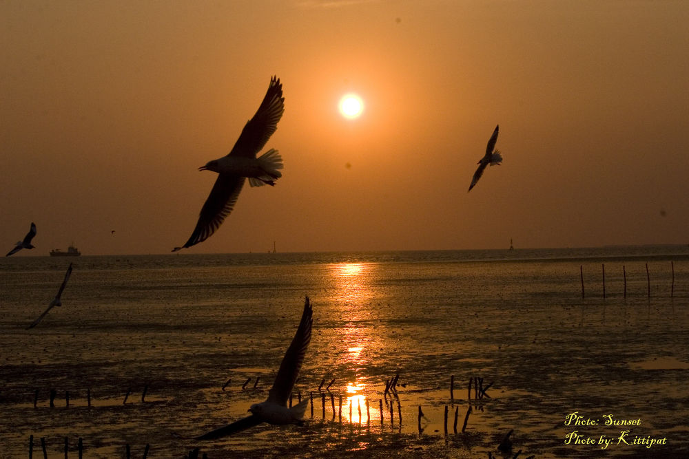 Sunset.jpg by kittipatboonchim