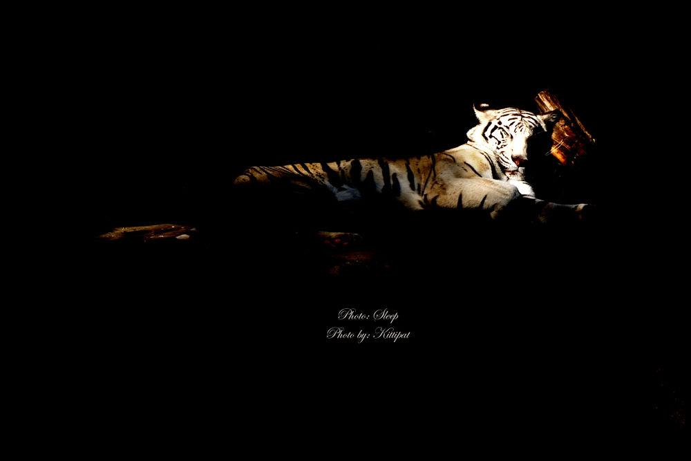 Sleep.jpg by kittipatboonchim