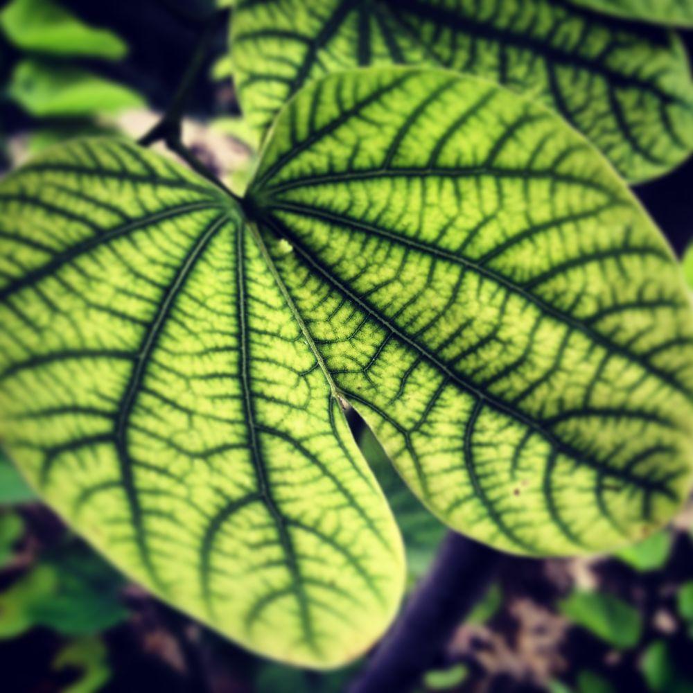 Go Green! by Nirmit Kapoor