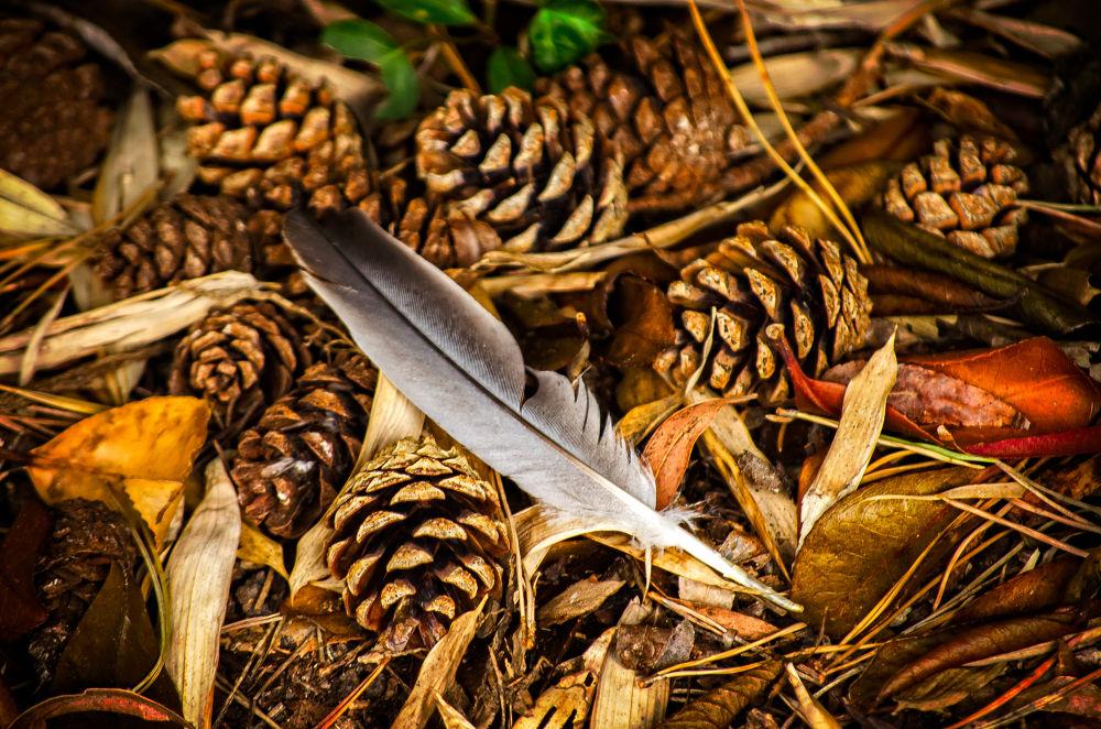 Photo in Random #nikon #d5100 #55-200mm vr #feather #pine cone #garden #ventnor #ventnor botanic garden #isle of wight #fine art #lightroom #perfect effects