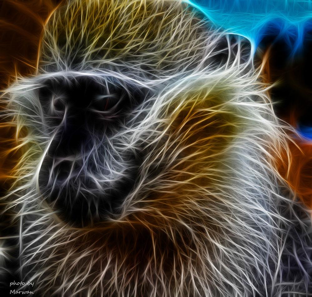 Glowing Monkey by Marwan Elshouky