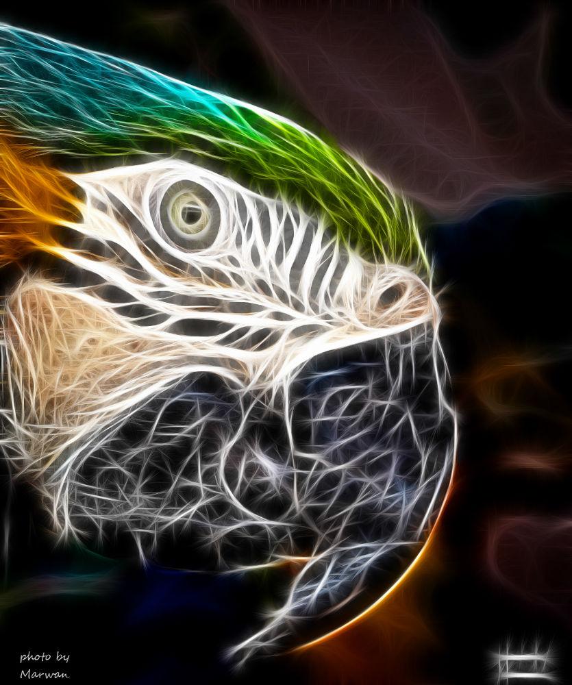Angel parrot by Marwan Elshouky