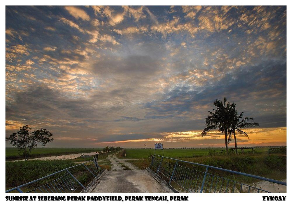 Sunrise at Seberang Perak Paddyfield - Perak Tengah 中霹雳县, Perak 霹雳州, Malaysia 马来西亚 by zhongyingkoay
