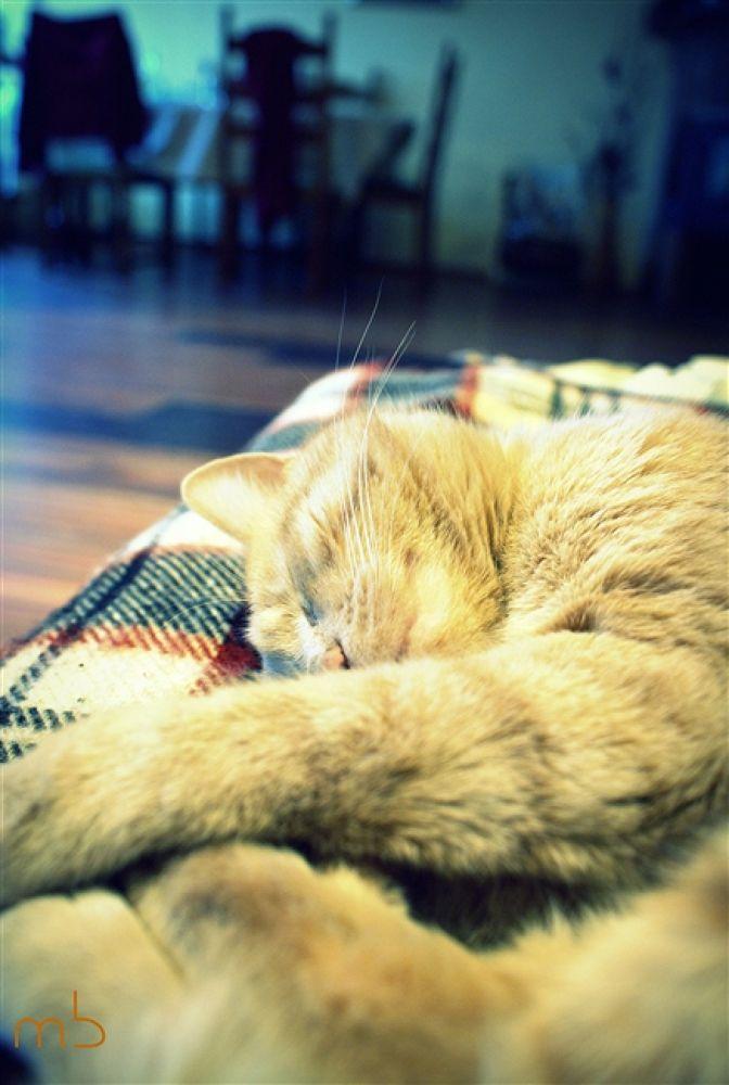 Майло спи by mar4