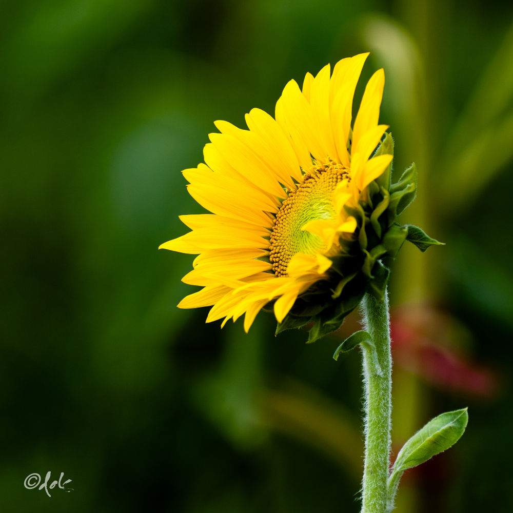 IMG_7088 by dohptms