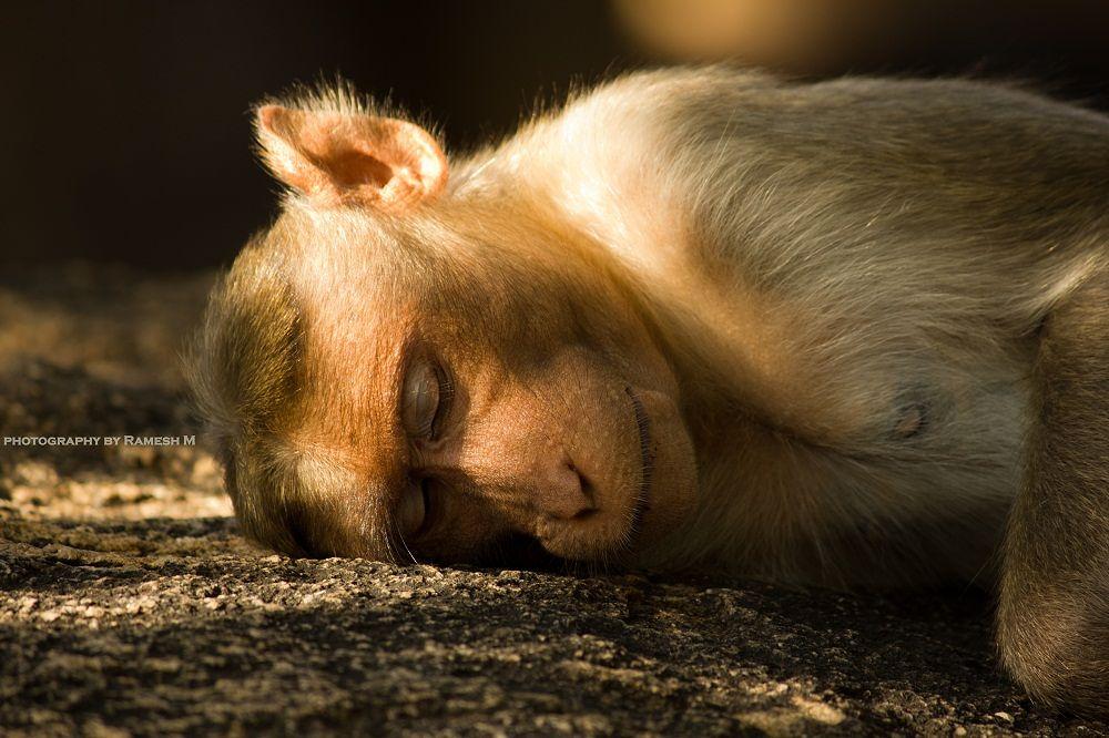 Innocent Sleeping!! by Ramesh Muthaiyan