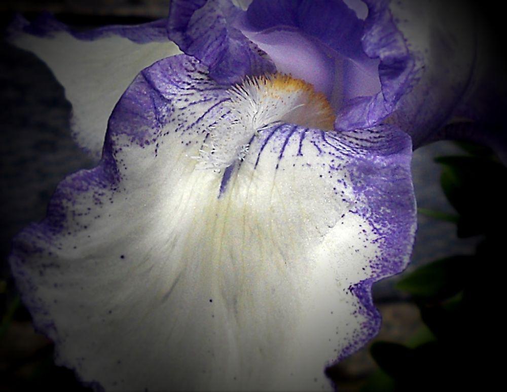 Flower by marilenavaccarini