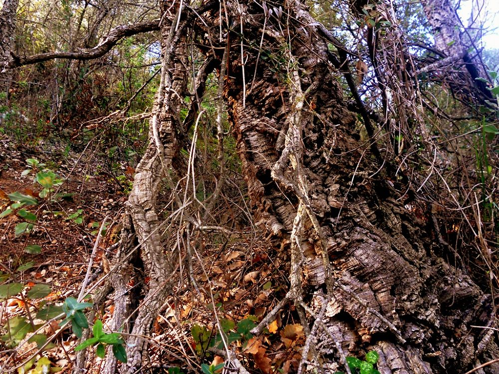 Photo in Random #nature #trees #wood #forests #autumn