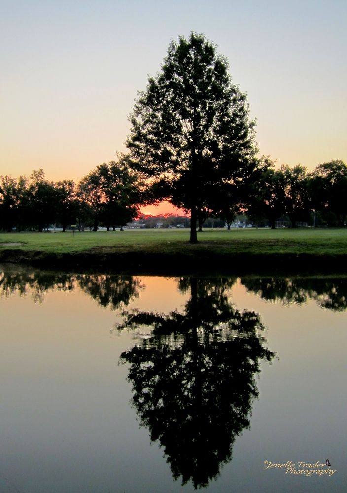 reflecting tree 2 sig.jpg by Jenelle Trader