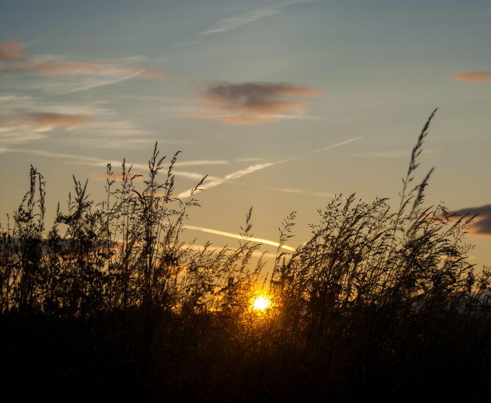 Photo in Landscape #sun #sunset #landscape #evening #warm #summer #ypa2013 #nikon
