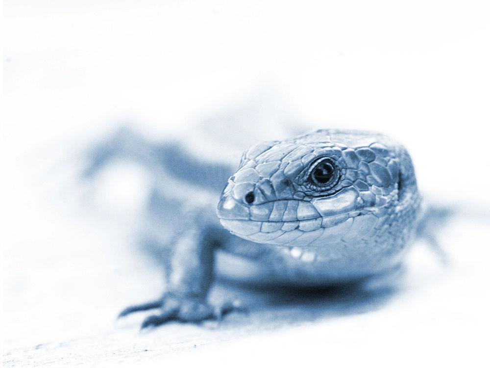 gekko.jpg by manidani