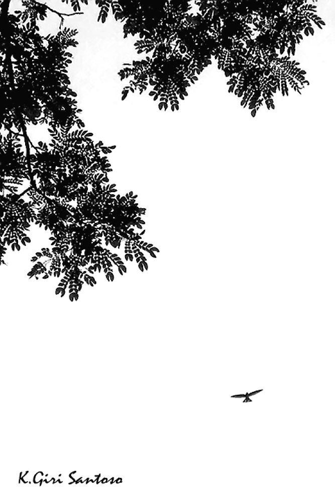 fly.jpg by KawanGS