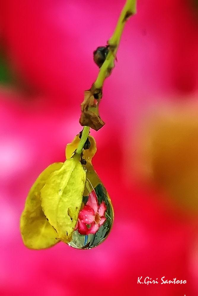 diantara-daun-yang-mengunin.jpg by KawanGS