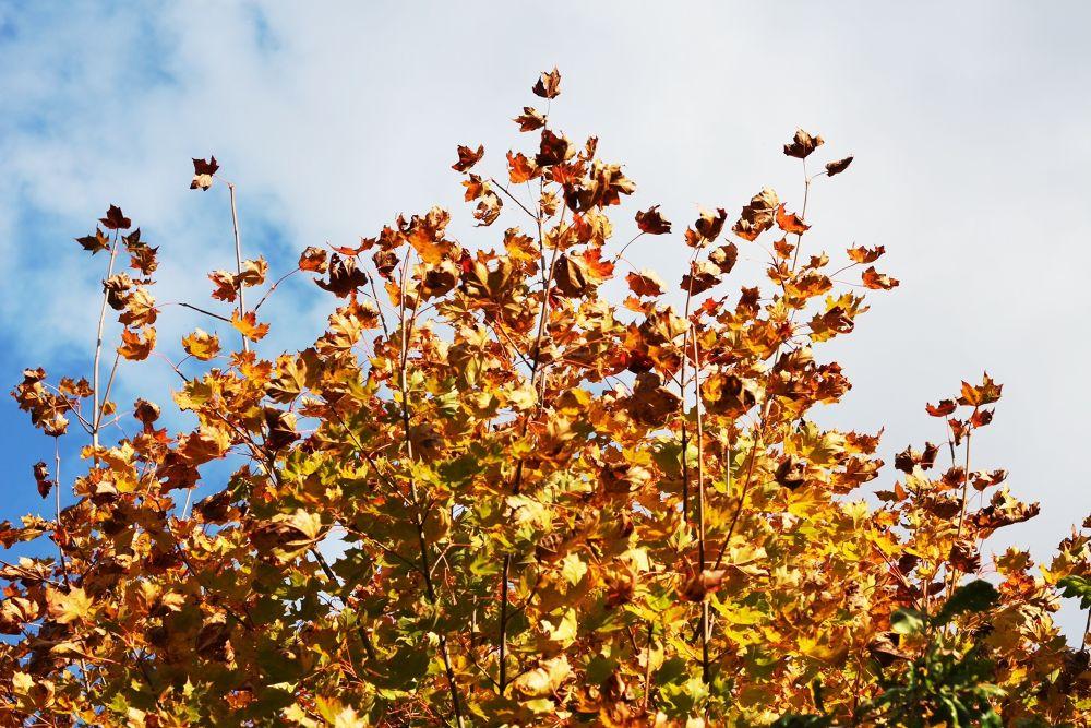Autumn by kickilina68